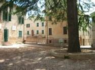 il grande albero davanti all'asilo